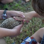 This how to pet Earl the Hedgehog. If you touch just one needle it will poke you because it's sharp, but if you lay your hand flat and touch all the needles it not.