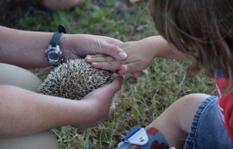 How to pet a hedgehog so you don't get poked