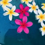 Plumeria blossoms floated in the pool and the fragrant scent filled the pool area.