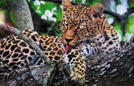 African Safari Inspires Newfound Passion for Photography